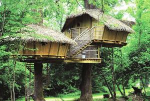 Bijzonder wonen: leven in een boomhut